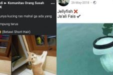 11 Status lucu Facebook tentang hewan, absurdnya bikin geleng kepala
