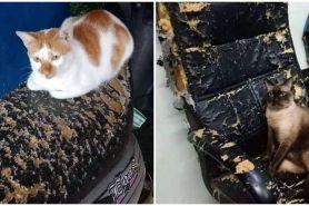 11 Momen ngenes barang rusak ini cuma pemilik kucing yang paham