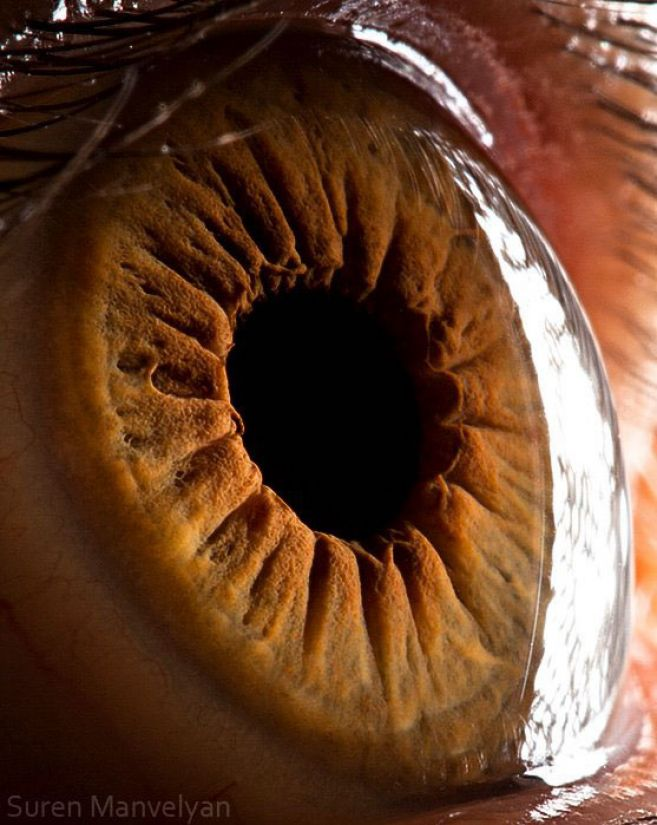 20 Foto close up mata ini bikin takjub sekaligus merinding!
