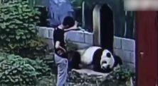 Manusia Lawan Panda, Siapa Pemenangnya?
