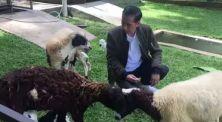 Presiden Jokowi Main Dengan Kambing Peliharaan di Vlog Barunya