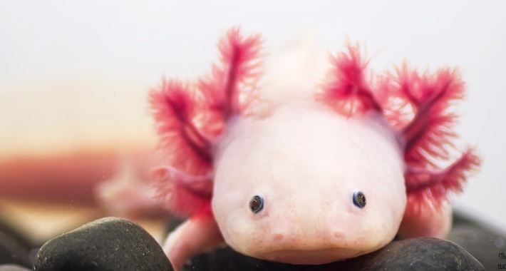 10 Strange Looking Animals That Are Actually Cute thethings © thethings