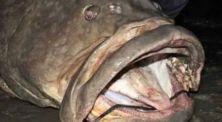 Ikan Lele Bisa Menelan Manusia? Inilah 5 Hewan Terbesar yang Pernah Ditemukan