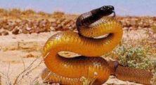 Ngeri! Inilah 5 Hewan Paling Mematikan di Benua Australia