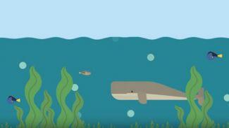 Kenapa Ada Tumbuhan di Bawah Laut? Ini Penjelasan Ilmiahnya!