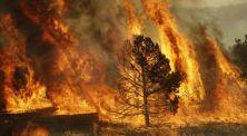 Selain California, Inilah 5 Kasus Kebakaran Terparah di Dunia!