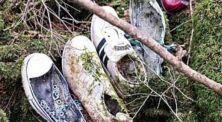 5 Fakta Mengerikan Hutan Aokigahara Tempat Bunuh Diri Paling Terkenal di Jepang