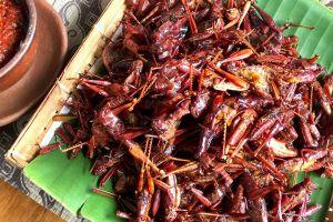Belalang goreng, camilan khas Gunung Kidul yang ngehits