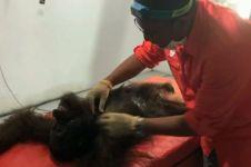 Orangutan ini mati setelah ditembak sampai 130 kali, sadis banget