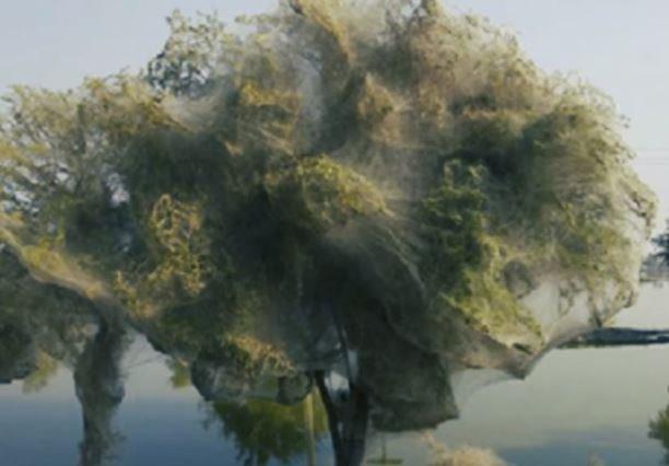 Pohon Menyemburkan Air 4 Fenomena Langka yang Jarang Diketahui © 2018 famous.id