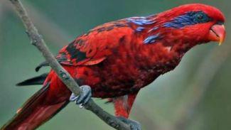 Miris! 5 Hewan Asli Papua Terancam Punah Akibat Perburuan Liar