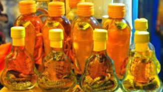 Berisi Ular Kobra! Inilah 5 Minuman Paling Menjijikan dan Berbahaya di Dunia!
