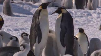 5 Fakta Unik Tentang Hewan Penguin yang Belum Kamu Ketahui!