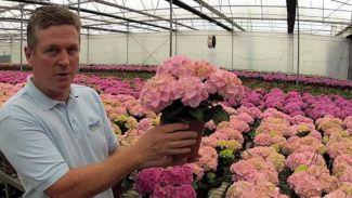 Bisa Buat Beli Rumah! 5 Bunga Dengan Harga Selangit Bikin Geleng Kepala