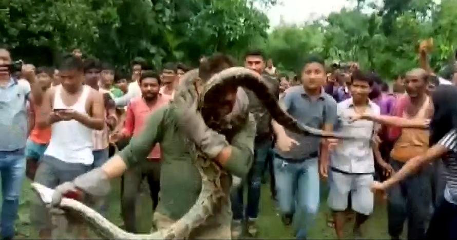 Penjaga hutan hampir terlilit saat selfie bareng ular piton