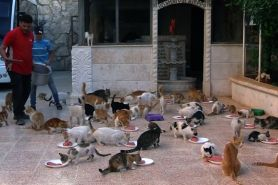 Sopir ambulans di Suriah ini tampung puluhan kucing yang telantar