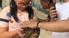 Ini reaksi orang-orang saat pertama kali menyetuh reptil!